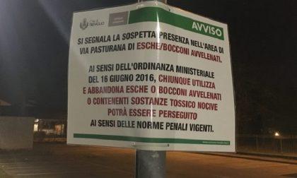 Treviglio: Bocconi avvelenati nelle aree cani. Scatta l'allarme in Geromina – TreviglioTV