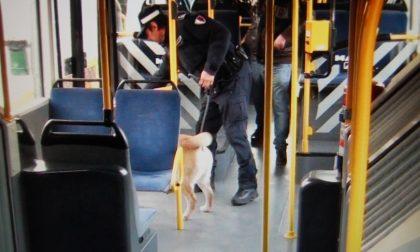 """Controlli anti-spaccio sugli autobus degli studenti: """"Fumano mentre vanno a scuola"""" – TreviglioTV"""