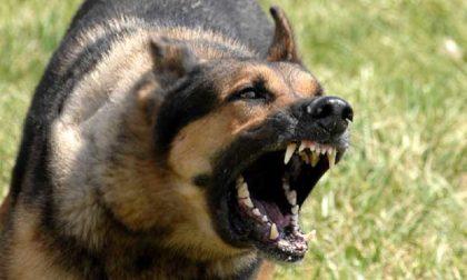 Bimba azzannata dal cane l'animale non sarà abbattuto