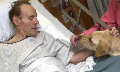 Cani e gatti in ospedale : da Treviglio la rivoluzione che apre le porte agli animali domestici