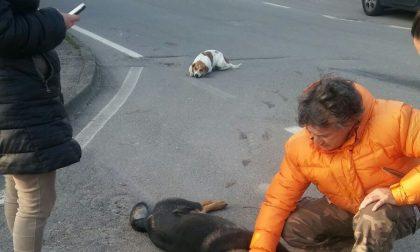 Sola: investe  tre cani, ne uccide due, scatta la  rissa coi proprietari -TreviglioTv