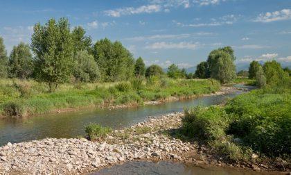 Bio Blitz, Lombardia da casa mia: al via il quinto censimento regionale delle aree protette