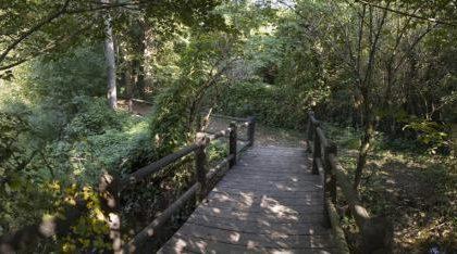"""Treviglio – """"Che pianta è?"""", ci pensano gli amici del parco del Roccolo – TreviglioTv"""