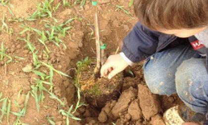 """A Calvenzano con guanti e paletta: """"Adotta un albero"""" per la salvaguardia dell'ambiente"""