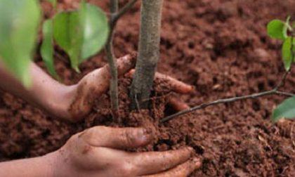 Fara d'Adda: Nel giardino della scuola 19 nuove piante, gli studenti tutelano l'ambiente  – TreviglioTV