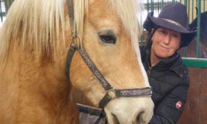 Trevigllio: una casa di riposo per i cavalli anziani e malati – TreviglioTV