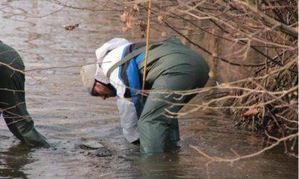 Treviglio: indagine su rogge e canali del territorio, martedì i risultati – TreviglioTV
