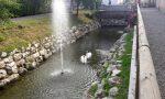 Misano, il Fontanile ripulito rinasce con una fontana e i cigni
