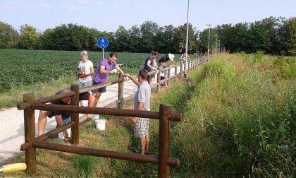 """Ecco """"Curiamo il bosco d'estate"""", volontari al lavoro al Cerreto FOTO"""