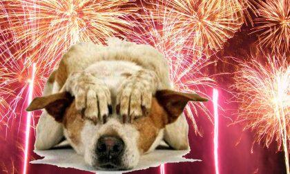 Paura dei fuochi d'artificio? Ecco come aiutare cani e gatti