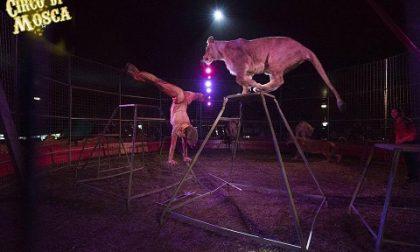 """Arriva il circo e scoppia la polemica: """"Boicottiamolo"""""""