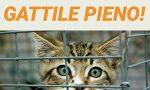 Mici senza casa, ma il gattile è pieno
