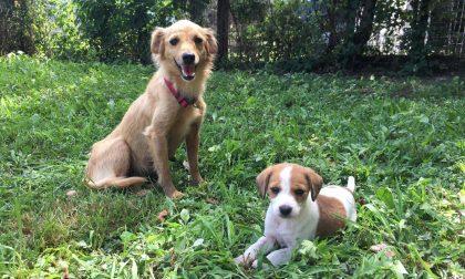 Abbandonate in un campo, Goldie e Pixie cercano casa