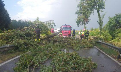 Bomba d'acqua a Roncadello di Dovera, sradicati i tigli e abbattuto un palo dell'elettricità