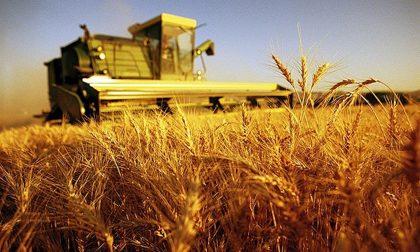 Il G7 dell'agricoltura è alle porte: Treviglio e la Bassa grandi assenti