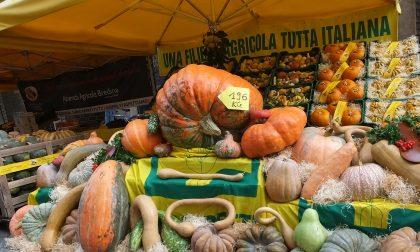"""Domenica a Crema il """"Festival della zucca"""""""