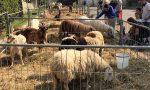 Agriturismo lombardo in crescita: Bergamo è la quarta provincia per numero di aziende
