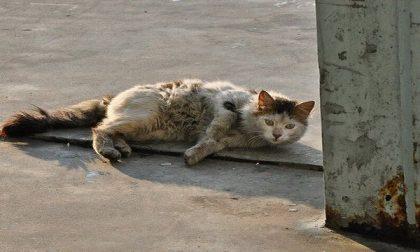 """Volontarie lanciano l'appello: """"Impariamo a sterilizzare e rispettare i gatti"""""""