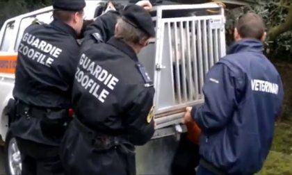 Corso per guardie zoofile contro il maltrattamento degli animali