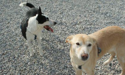 Giro di vite sui cani lasciati liberi e senza museruola in paese