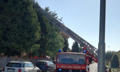 Pompieri al lavoro per salvare un gatto, strada chiusa nell'ora di punta