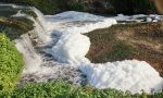 Schiuma bianca nel canale, via ai controlli