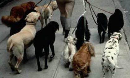 Trentenne assalito al parco dai suoi dieci cani