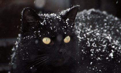 Emergenza gatti 300 mici senza casa per l'inverno