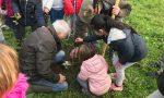 Caravaggio verde, ecco come cambieranno parchi e giardini