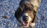Cane morde la vicina che minaccia vie legali