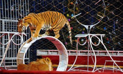 Circo Kino con gli animali, scatta la rivolta