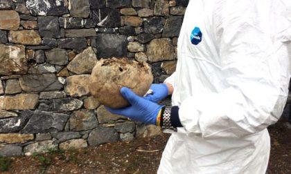 Teschio umano ritrovato nell'Adda