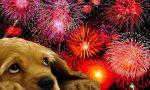 Botti di capodanno come tutelare gli animali
