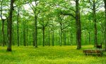 Un bosco di 7000 piante in arrivo a Romano