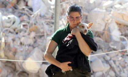 In caso di calamità la Protezione Civile aiuterà anche gli animali