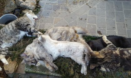 Gatti avvelenati nella notte e scatta l'allarme su Facebook