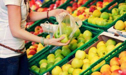 Sacchetti frutta a pagamento tutte le bufale della rete