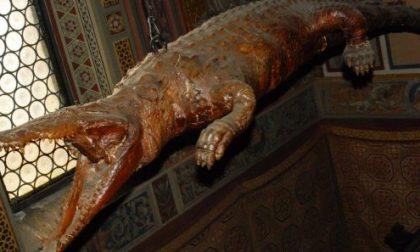 Il coccodrillo imbalsamato di Ponte Nossa