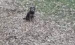Cane nel fossato della Rocca soccorso da un passante