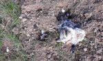 Conigli scuoiati, rifiuti e droga: degrado nella zona della ferrovia FOTO