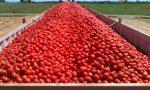 Prezzo pomodori, ok all'accordo: all'agricoltore meno di otto cent al chilo