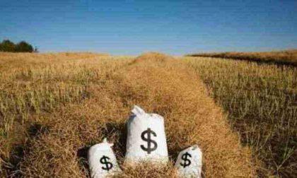 Agricoltura, bando da 1,2 milioni di euro per la filiera corta