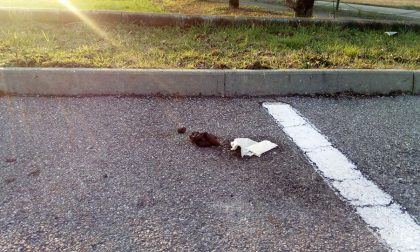 Feci umane davanti all'ingresso del cimitero, è caccia al vandalo