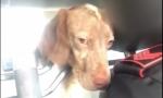 Carabinieri salvano cane e rischiano la sanzione disciplinare VIDEO