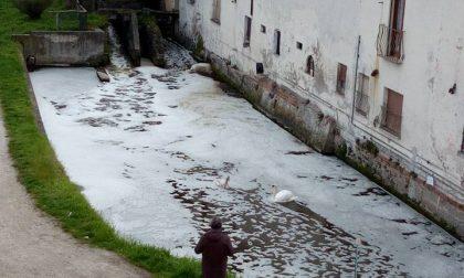 Sversamento in roggia | Ancora schiuma e pesci morti nei fossi