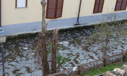 Disastro ecologico | Da Caravaggio a Crema ecosistema distrutto FOTO