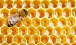 Allerta maltempo sconvolge le api – 50% di miele