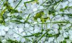 Allerta maltempo nella Bassa sale il Po, danni alla semina