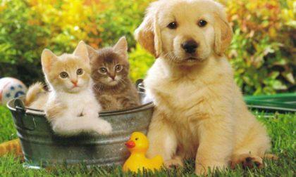 Garante degli animali, la nomina a Sara Resmini