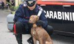 Cani da guardia per proteggere la droga, barista arrestata